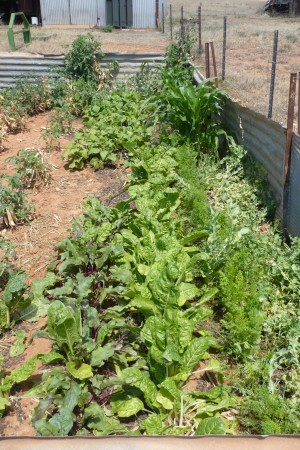 Margie's Vegetable Patch