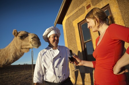 Pichi Richi Camel Tours Camel to Candlelight Dinner